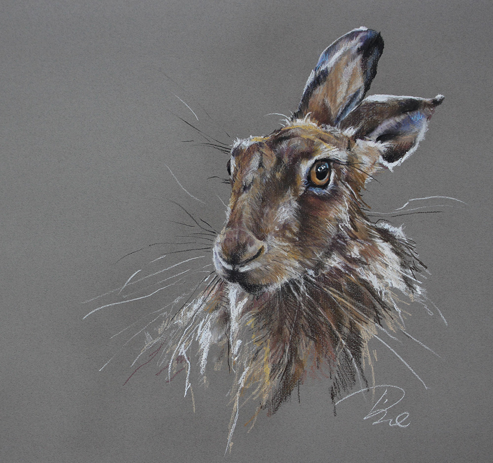 Paula Vize art Hare pencil drawing