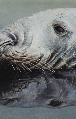 Seal Study by Nicolas Manning