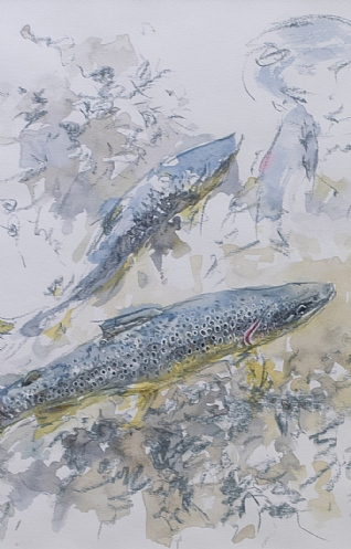 Territorial Trout 2 by Carl Ellis