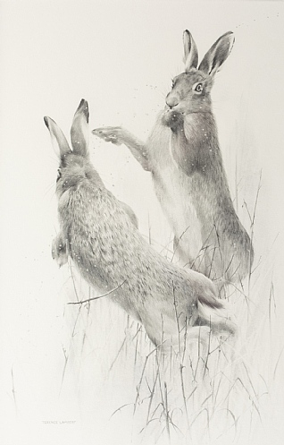 Hare Madness by Terence Lambert