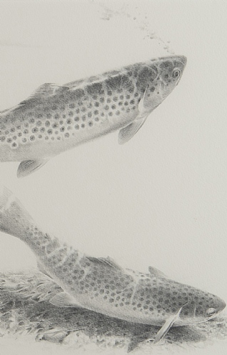 Trout Studies by Terence Lambert