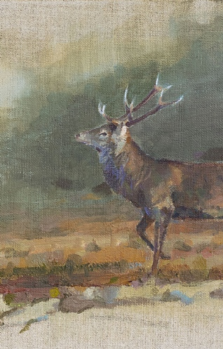 Traveling Stag by Ian MacGillivray