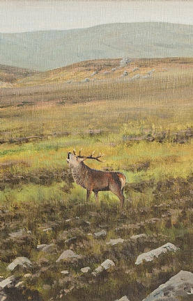 Rutting Stag by Alistair Makinson