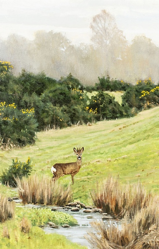Spring Time Roebuck by Alistair Makinson