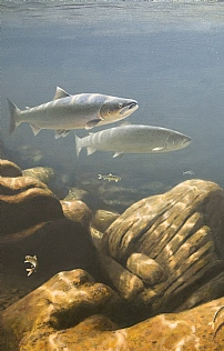Pair of Salmon by Rodger McPhail