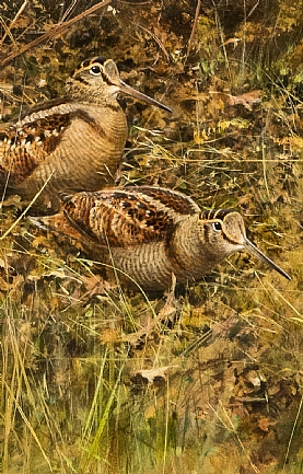 Two Woodcock by Rodger McPhail