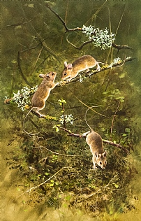 Three Mice  by Rodger McPhail