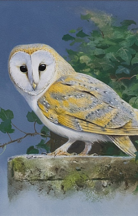 Barn Owl by Rodger McPhail