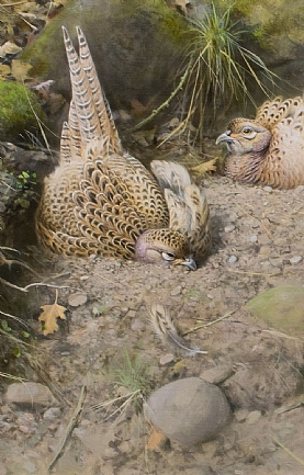 Dusting Hen Pheasants by Rodger McPhail