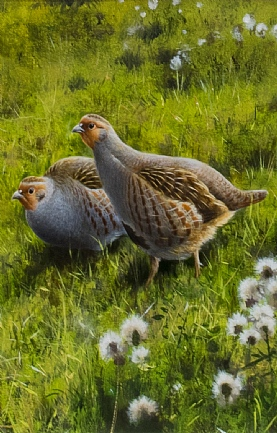 Grey Partridges by Rodger McPhail