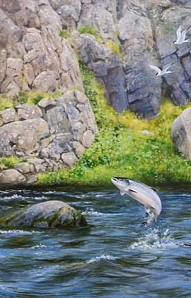 Salmon and Terns by Rodger McPhail
