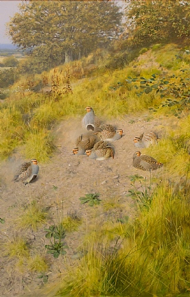 Dusting Partridges by Rodger McPhail