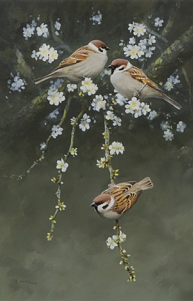 Tree Sparrows by Rodger McPhail