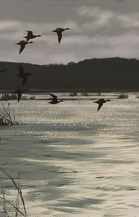Widgeon Over the Floodsby Rodger McPhail