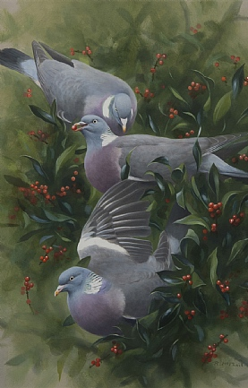 Woodpigeon in Holly by Rodger McPhail