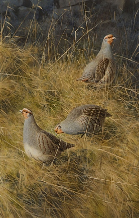 Partridge in the Grass by Rodger McPhail
