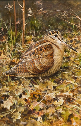Woodcock Among Leaves by Rodger McPhail