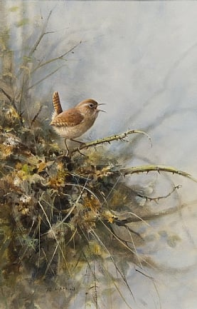 Wren by Rodger McPhail