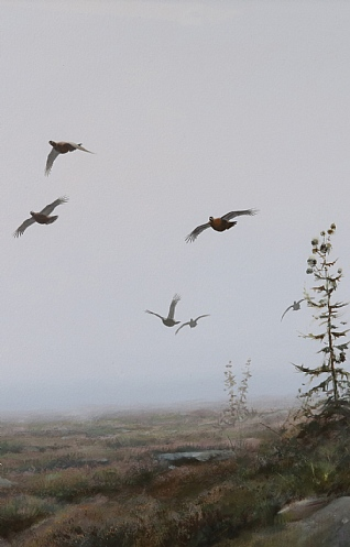 Grouse in the Mist by Rodger McPhail