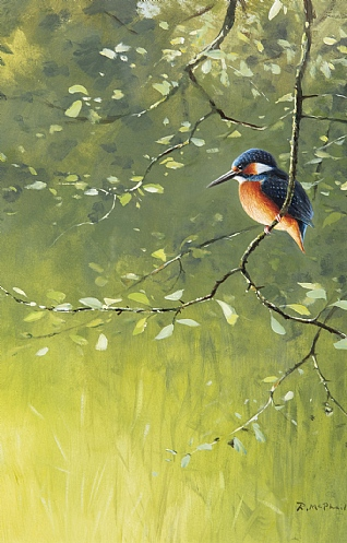 Kingfisher by Rodger McPhail