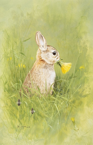 Rabbit by Rodger McPhail