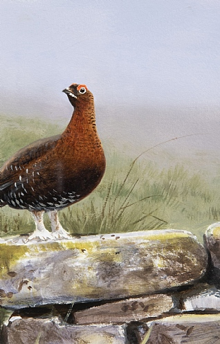 Single Grouse by Rodger McPhail