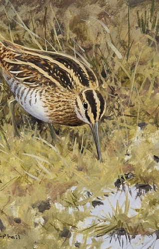 Snipe by Rodger McPhail