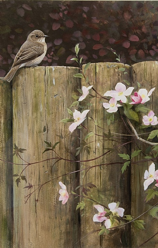 Spotted Flycatcher and Clematis by Rodger McPhail