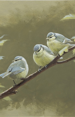 Three Blue Tits by Rodger McPhail