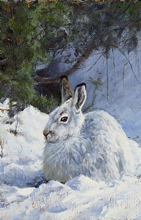 Winter Hares by Justin Prigmore