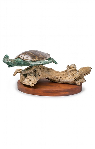 Large Turtle on Mahogany by Pete Johnston