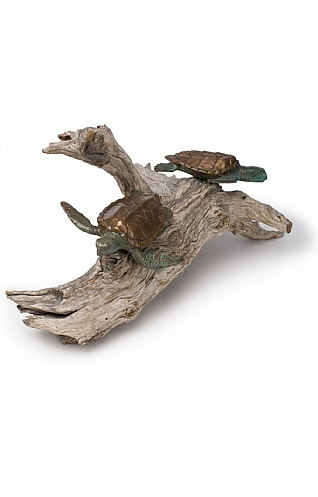 Young Turtles on Driftwood  by Pete Johnston