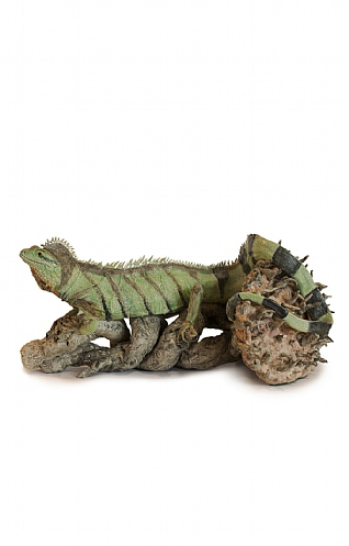 Uprooted Chinese Water Dragon by Jill Moger