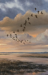 Dawn Flight, White Fronted Geese by Alastair Proud