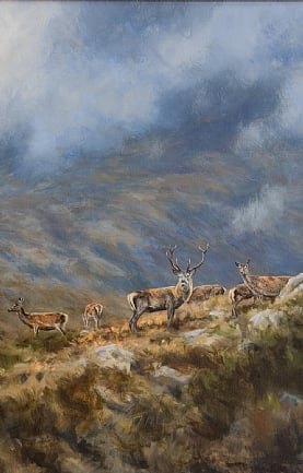 Stag and Feeding Hind on the Slopes of Slioch by Alastair Proud