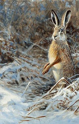 Winter Hare by Alastair Proud