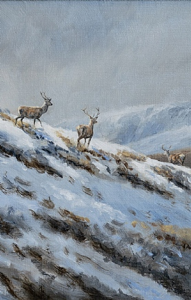 Snow on the Top - Stags on the Move by Alastair Proud