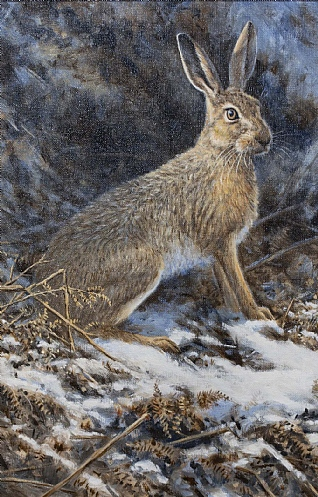 Winter Hare in Bracken by Alastair Proud