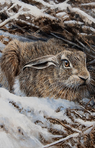 Ready for the Off - Brown Hare by Alastair Proud