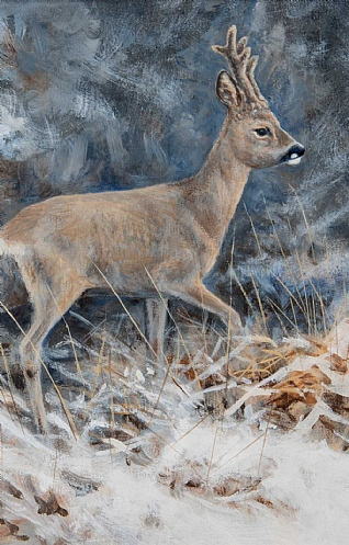 Hard Weather - Roe Buck by Alastair Proud