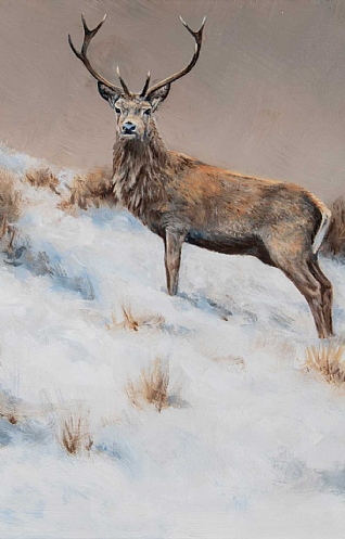 Winter Stag by Alastair Proud