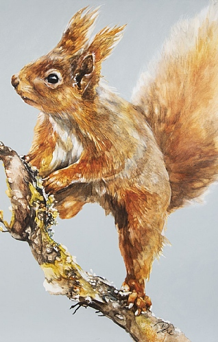 Seeking Red Squirrels by Paula Vize