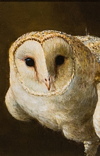 Barn Owl by Richard Whittlestone