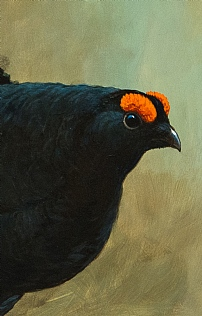 Black Grouse by Richard Whittlestone