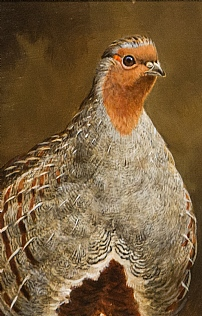 English Partridge by Richard Whittlestone