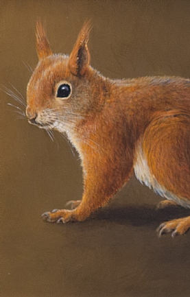 Red Squirrel by Richard Whittlestone