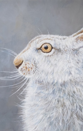 Mountain Hare Portrait by Richard Whittlestone
