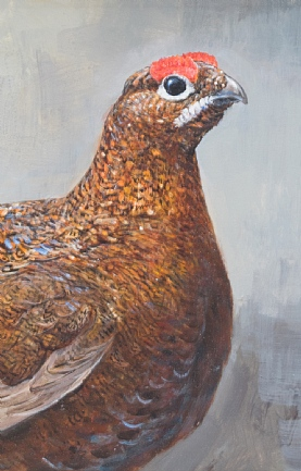 Red Grouse Portrait by Richard Whittlestone