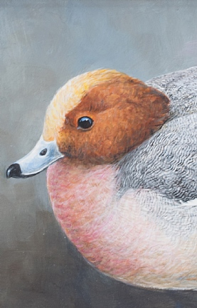 Widgeon Portrait by Richard Whittlestone