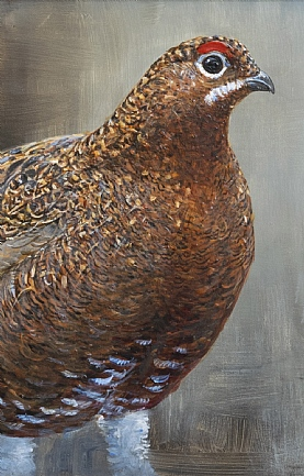 Red Grouse by Richard Whittlestone